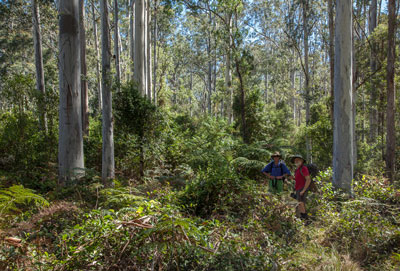Blue Gum Forest