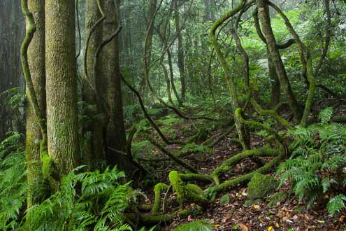Intermediate Northern Warm Temperate Cool Temperate Rainforest On Basalt Mount Wilson Ian Brown